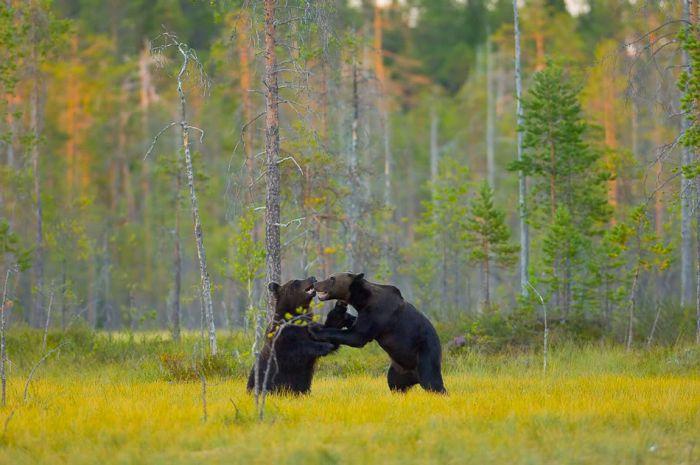 1261944537_1261712652_life_of_a_bear_family_13.jpg