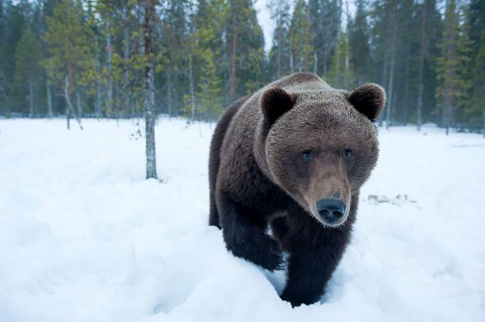 1261944591_ife_of_a_bear_family_01.jpg