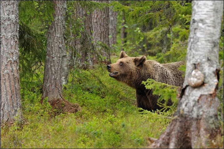 1284566329_bears-bears-12.jpg