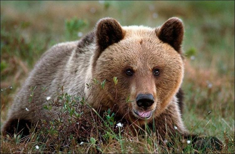 1284566341_bears-bears-16.jpg