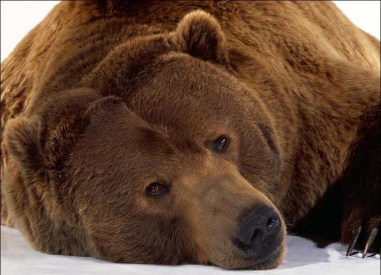 1284566345_bears-bears-14.jpg