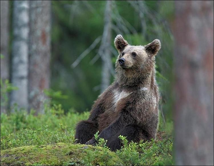 1284566359_bears-bears-41.jpg