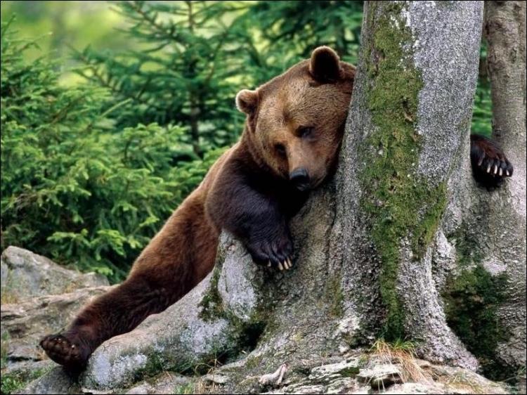 1284566368_bears-bears-04.jpg