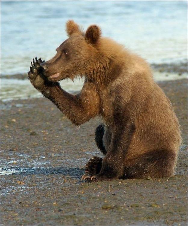 1284566369_bears-bears-36.jpg