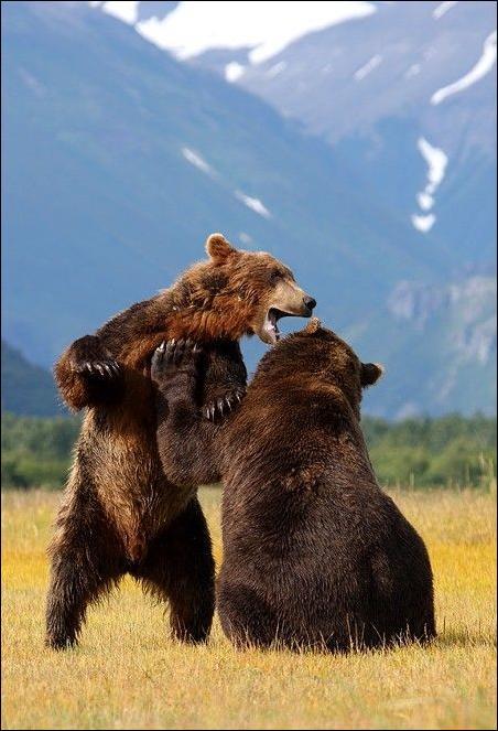1284566370_bears-bears-24.jpg