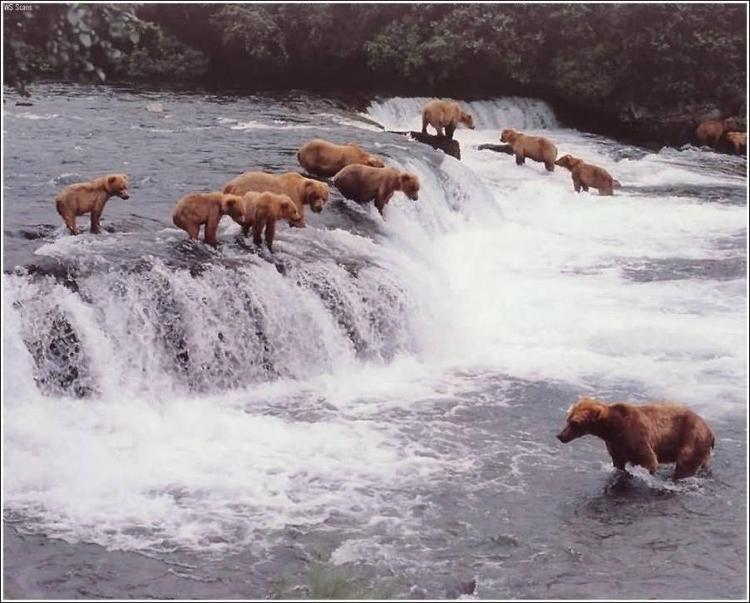 1284566375_bears-bears-31.jpg