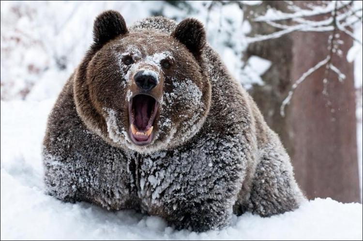 1284566382_bears-bears-62.jpg