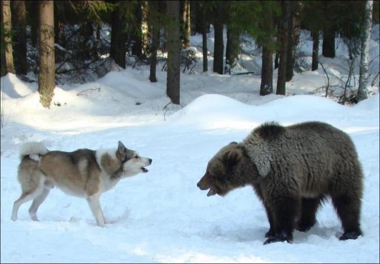 1284566384_bears-bears-50.jpg