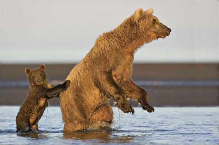 1284566392_bears-bears-09.jpg