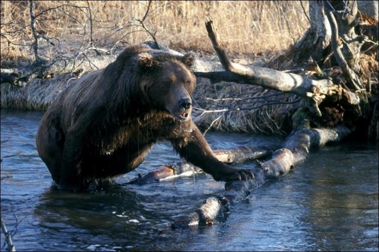 1284566393_bears-bears-63.jpg
