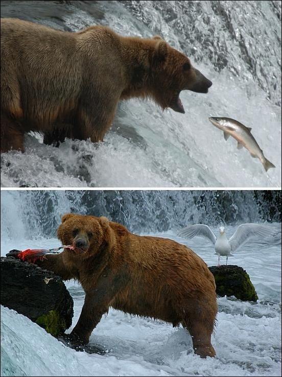 1284566411_bears-bears-55.jpg