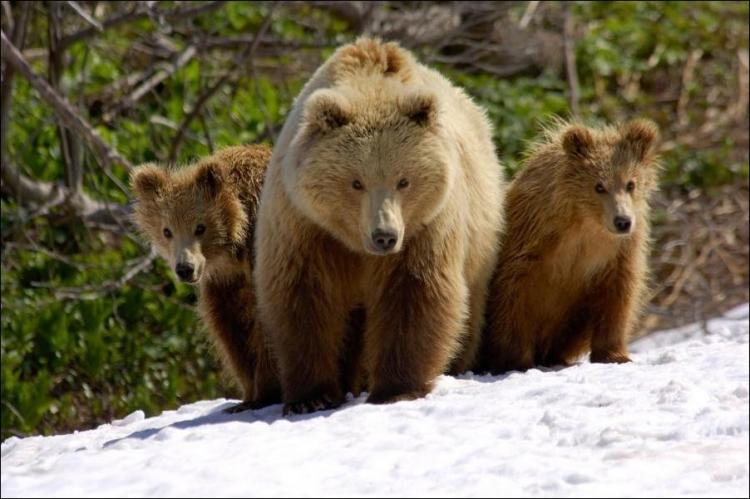 1284566411_bears-bears-60.jpg