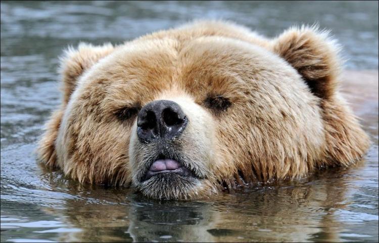 1284566420_bears-bears-98.jpg