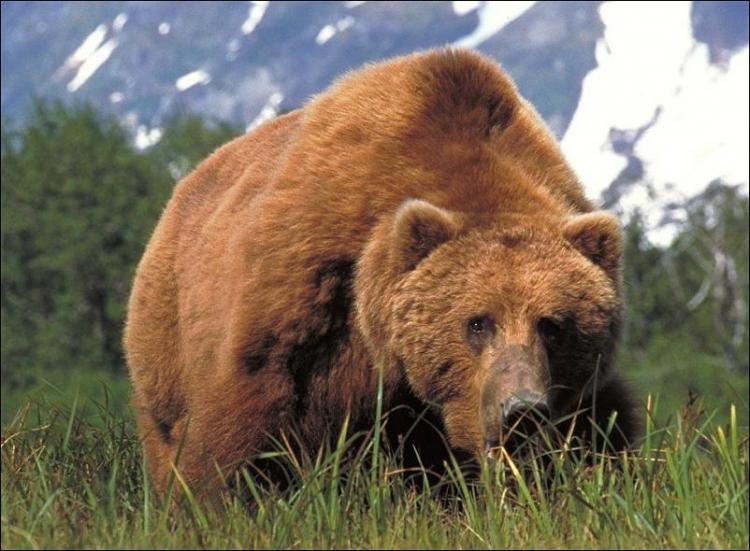 1284566426_bears-bears-86.jpg