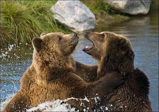 1284566437_bears-bears-32.jpg