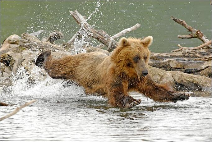1284566451_bears-bears-52.jpg