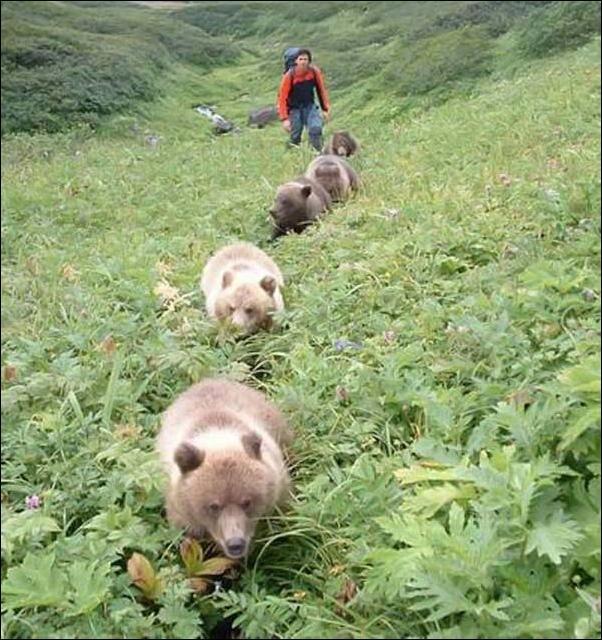 1284566476_bears-bears-115.jpg