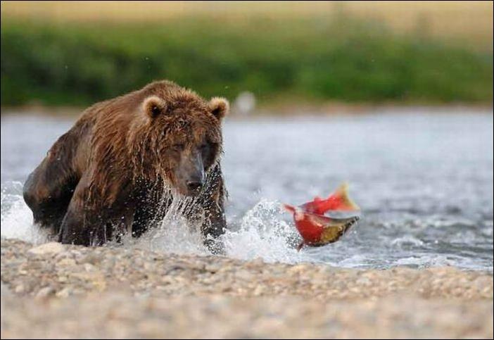 1284566485_bears-bears-91.jpg
