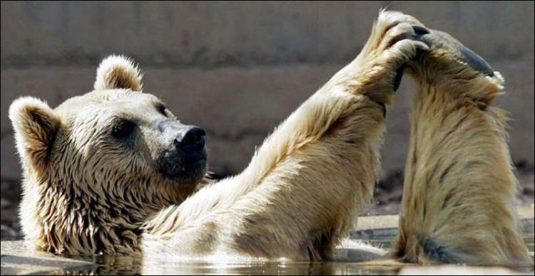 1284566489_bears-bears-110.jpg