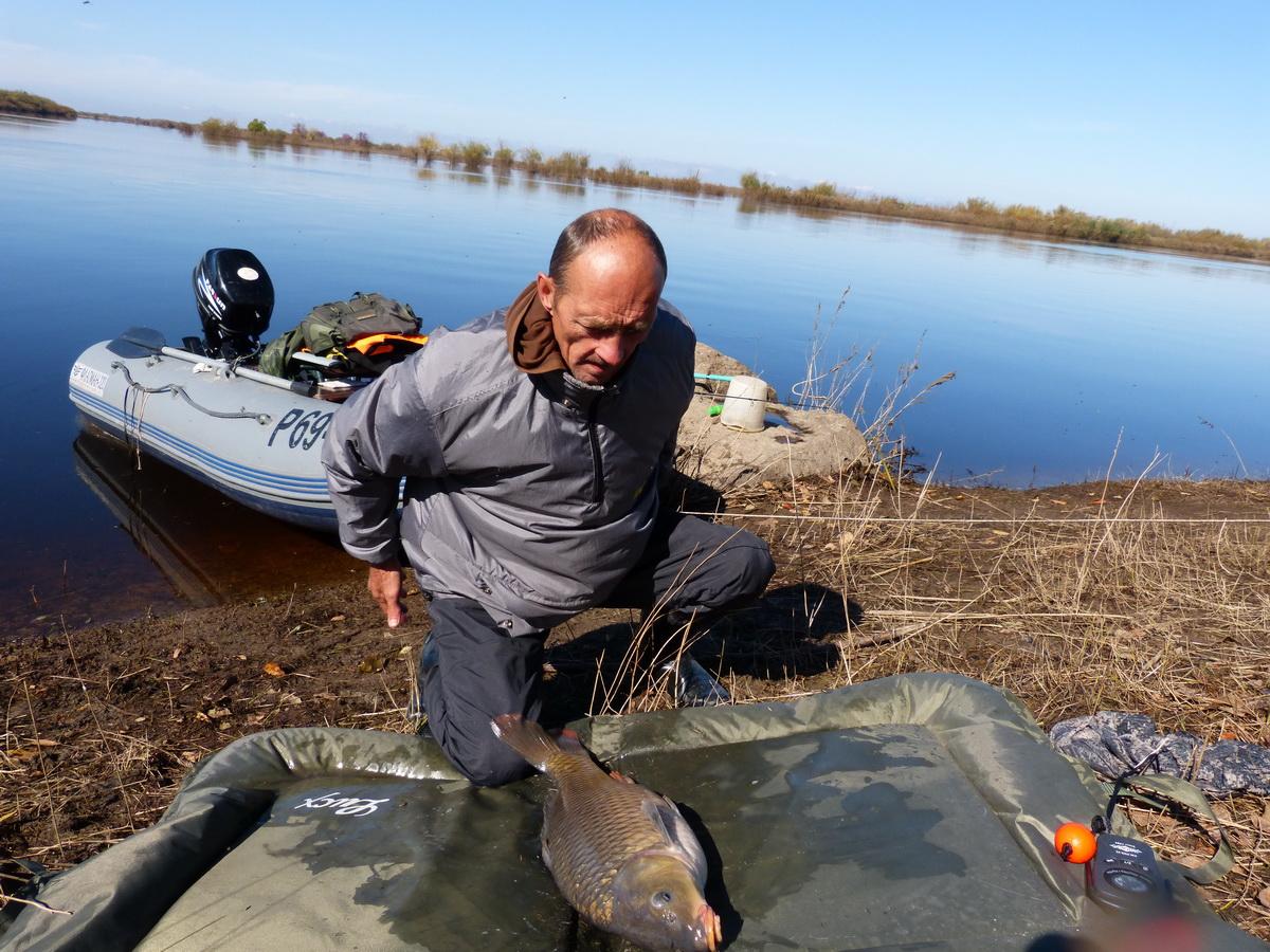 рыбалка на амуре на сазана