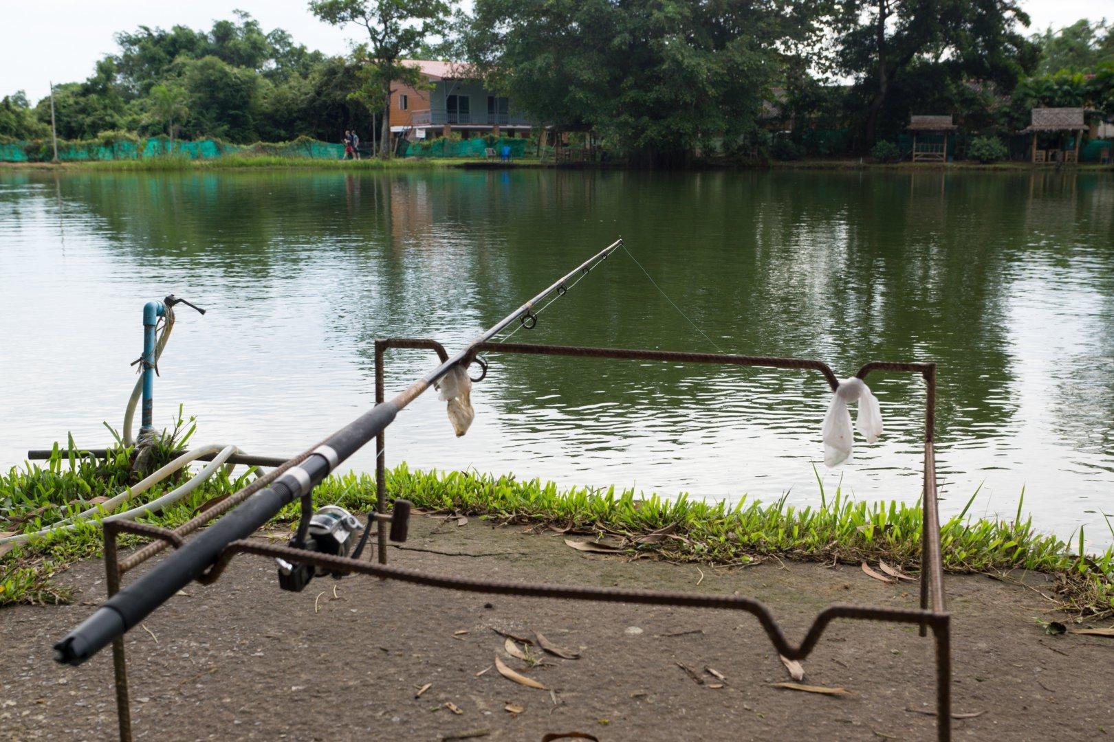 приманки рыбы