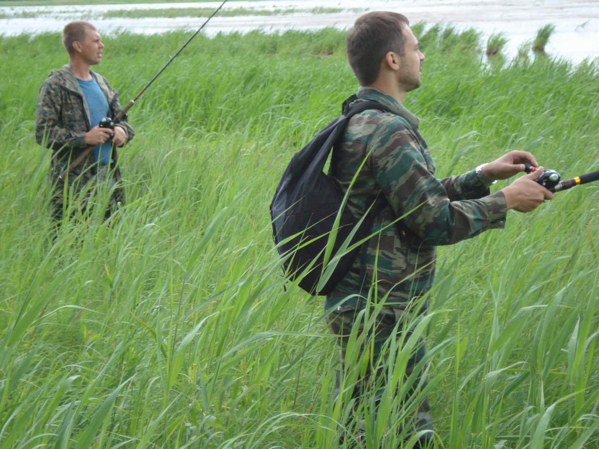 На что лучше ловить змееголова