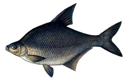 7105d1338960014-platnik-funnyfishing-3514.jpg