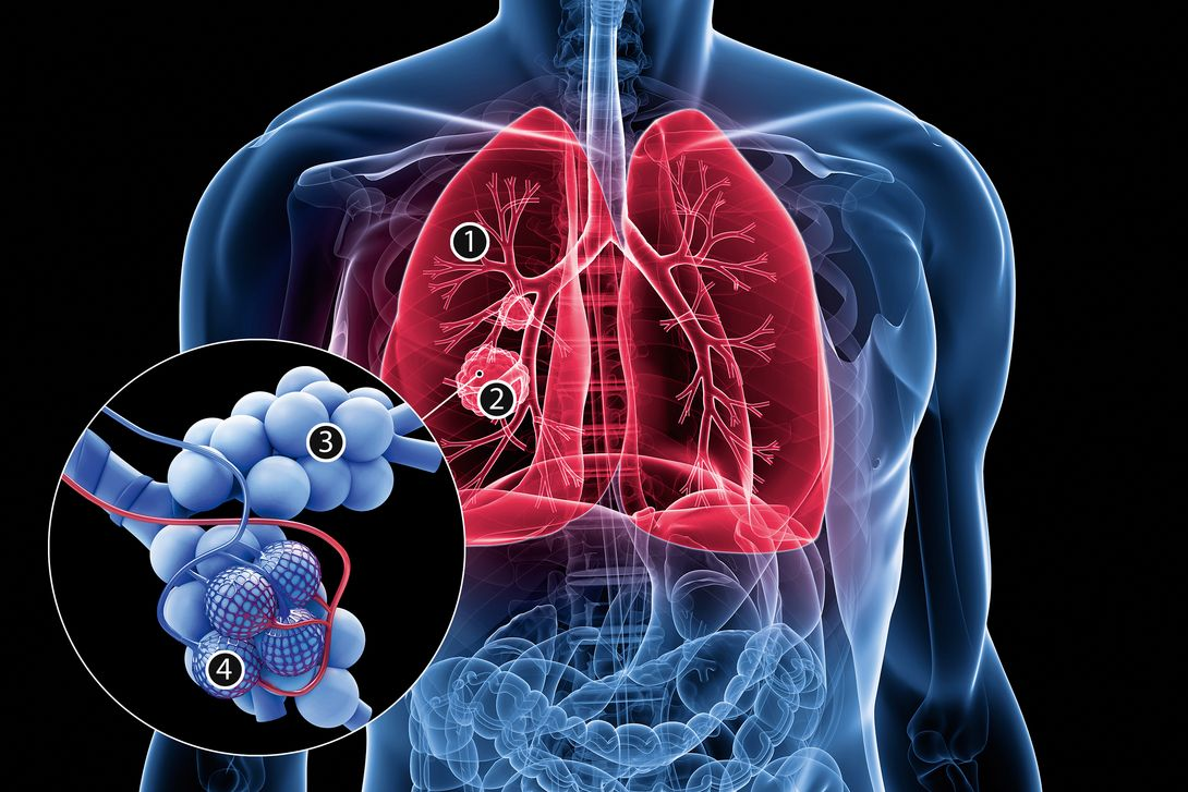csm_lungs_with_numbers_istock_8e1e91fa39.jpg