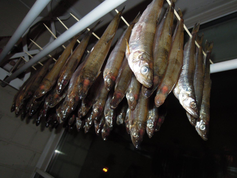 В таком состоянии оставляем солиться в течении дня, время от времени помешиваем рыбу.