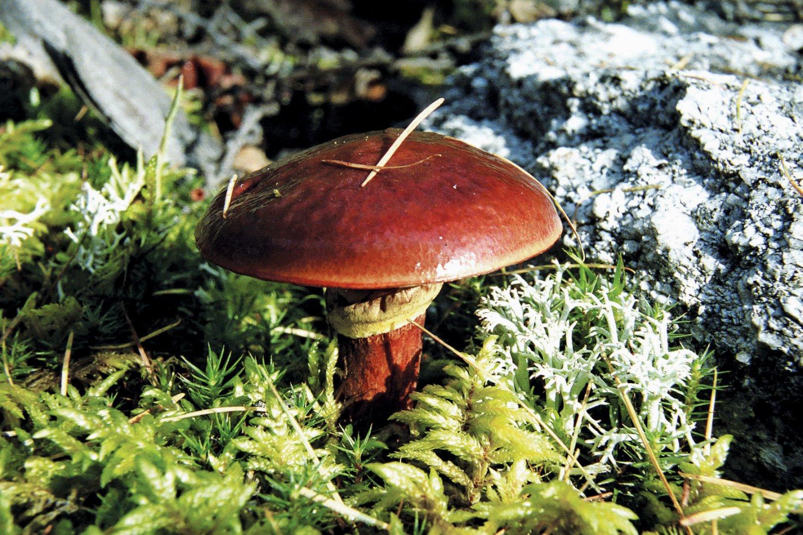 грибы-5_новый размер.jpg