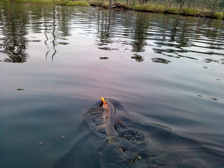 кунджа в воде.jpg