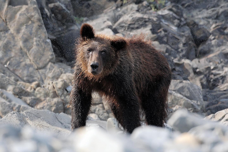 Медведь (2)_новый размер.jpg