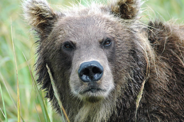 Медведь (3)_новый размер.jpg