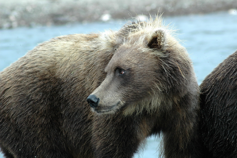 Медведи (2)_новый размер.jpg