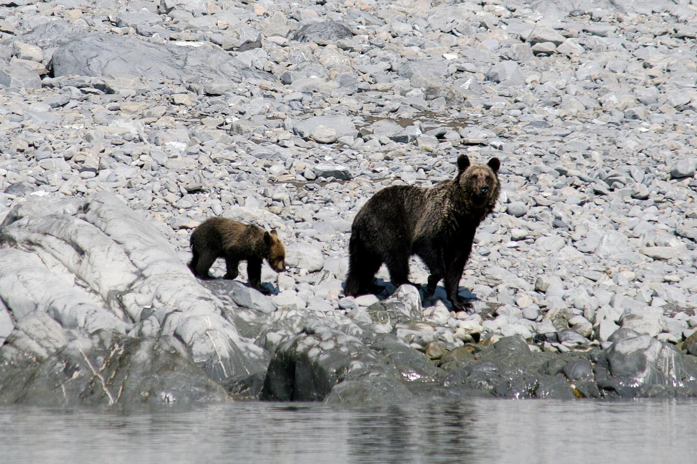 Медведи_новый размер.jpg