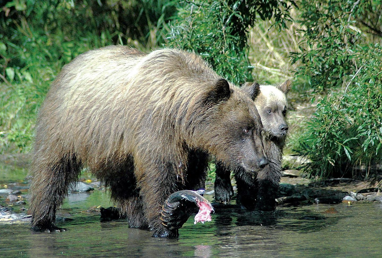 Медвежья рыбалка (2)_новый размер.jpg