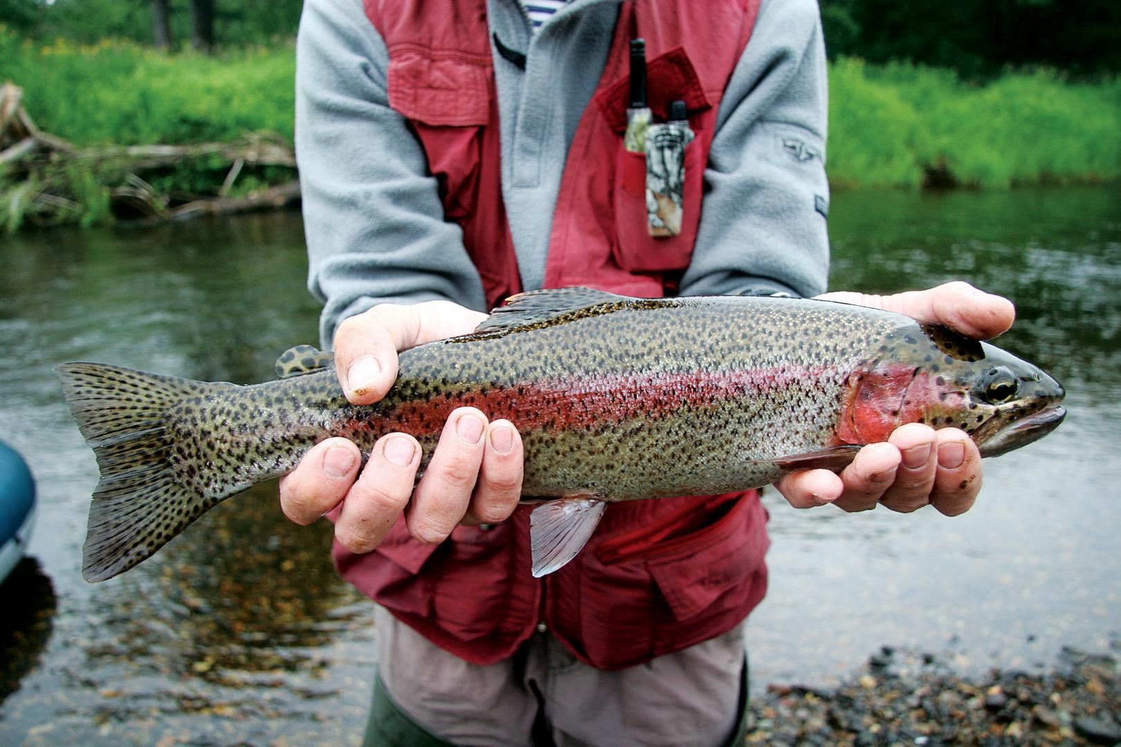 как ловить щуку в реке зея