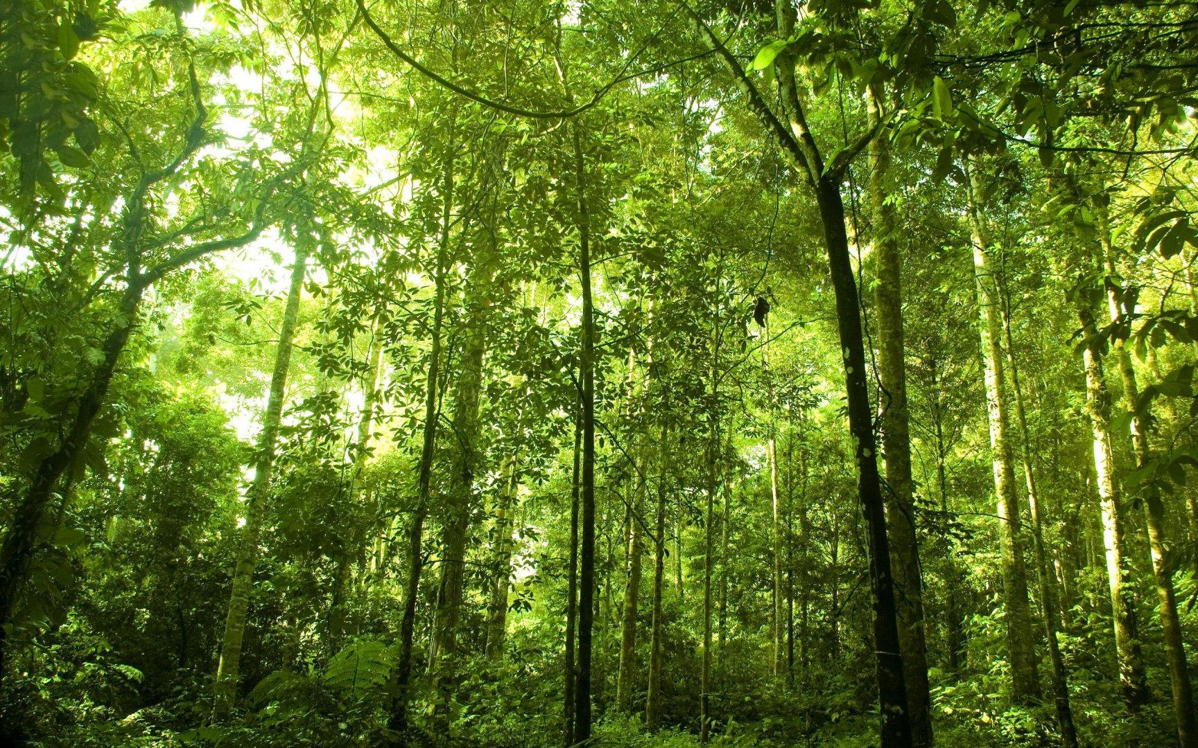 rabstol_net_forest_05.jpg