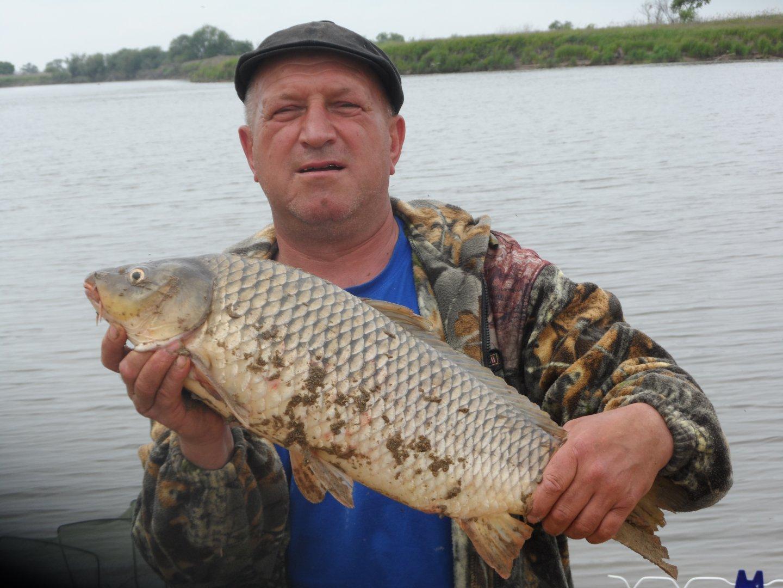 рыбалка на амуре сазан наживка