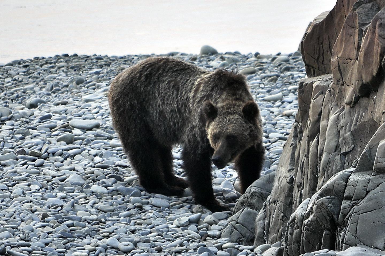 Шантарский медведь_новый размер.JPG