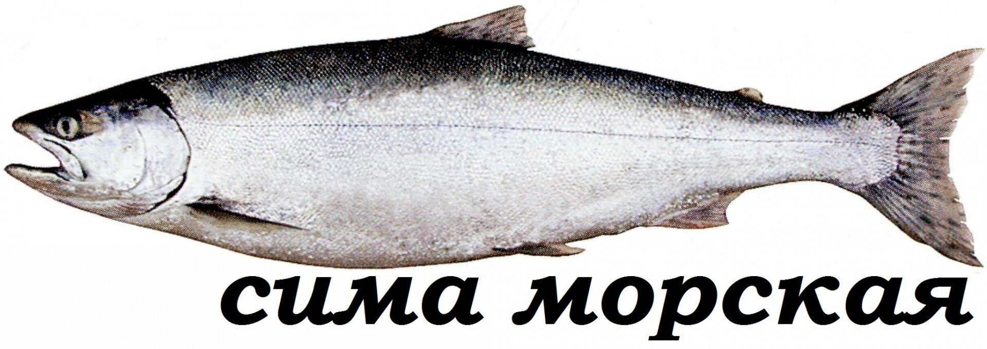 рыба сима в картинках что делать, чтобы