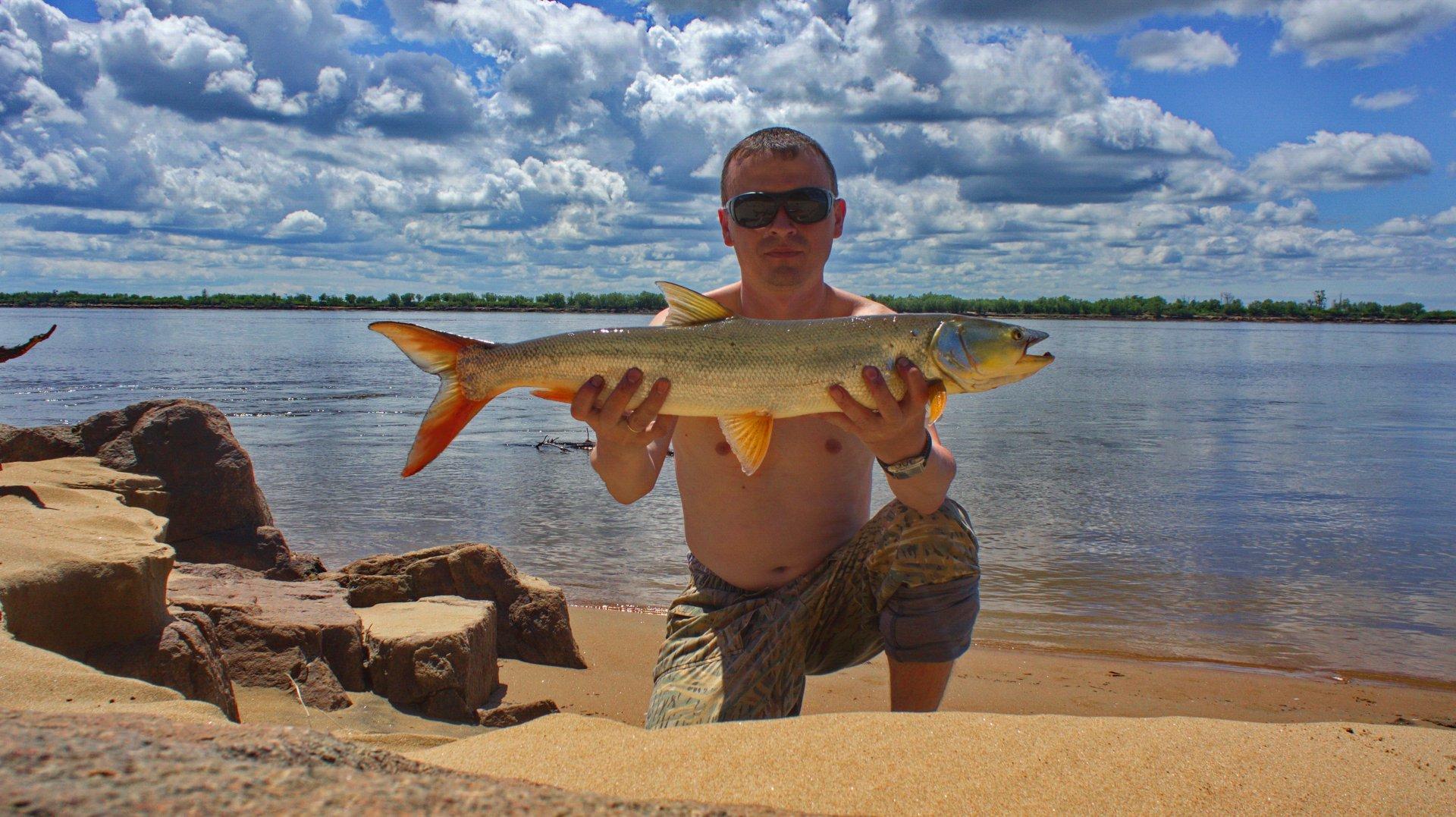 рыбалка на амуре желтощек