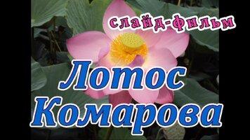 19 лотос комарова (авт. кухарская ольга ном. слайд-фильм.).jpg